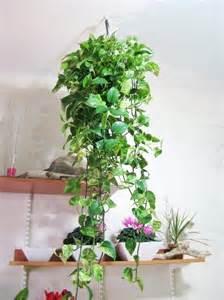 hanging house plants hanging house plants photos