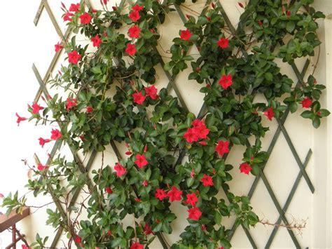 fiori piante piante da balcone ricanti con fiori e sempreverdi