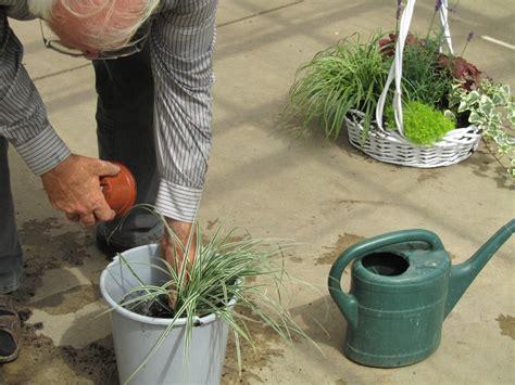harros pflanzenwelt pflanz sets pflanzen versand harro s pflanzenwelt kaufen