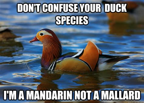 Mallard Duck Meme - don t wear uggs ever fashion advice mallard quickmeme