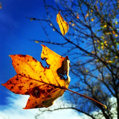 why do leaves change colors why do leaves change colors chicago tribune