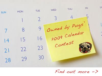pug contest the pug tags calendar owned by pugs