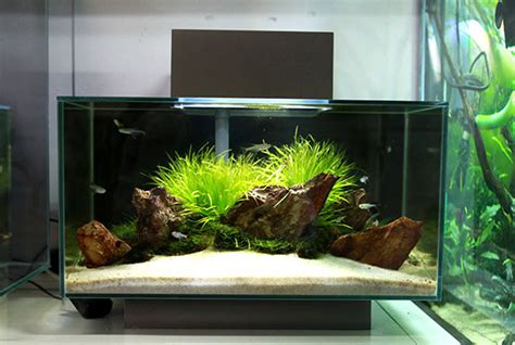 Fluval Edge Aquascape by Fluval Edge Shop Displays Aquascaping World Forum Http