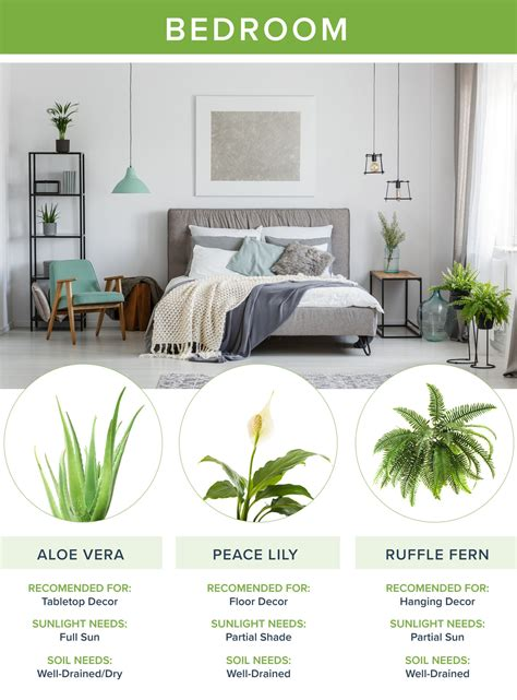 best plants for bedroom the best houseplants for every room going2natural