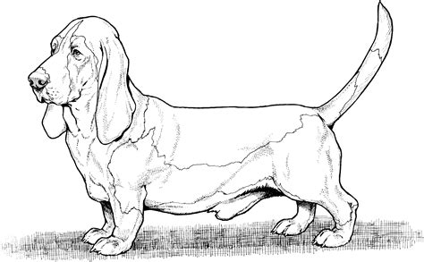 free coloring pages dog breeds dog breed coloring pages