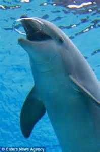 Forever blowing bubbles: Playful dolphins show off their