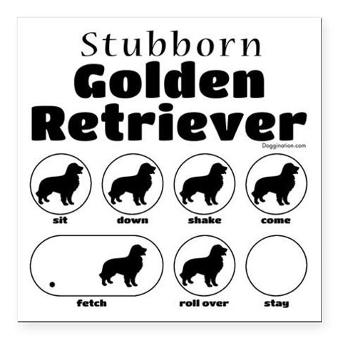 stubborn golden retriever 1000 images about stubborn tricks on chow chow cocker spaniel and