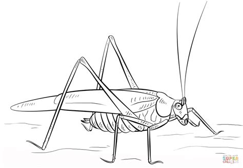 coloring page grasshopper grasshopper coloring page free printable coloring pages