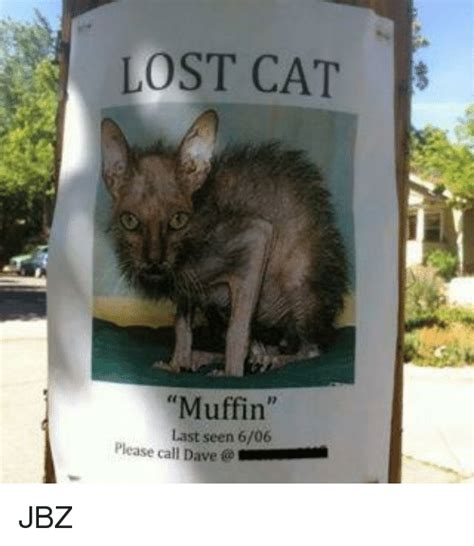 Missing Cat Meme - lost cat s muffin last seen 606 please call dave jbz
