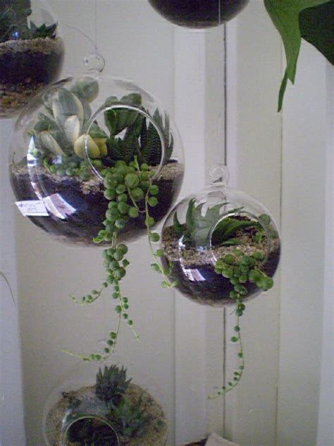 Dijamin Glass Dome Globe 8cm For Terrarium 6 pcs set glass air plant globe terrarium 8cm 10 12 15cm hanging vase tealight holders jpg