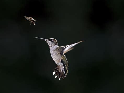 colibr fondos de pantalla 1920x1200 432 resoluci 243 n del colibr 237 y fly wallpaper hd fondos de