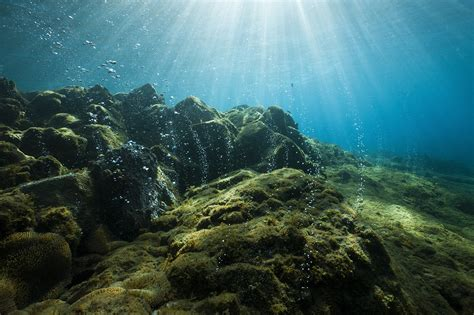 the ocean at the oxygen levels in oceans are dropping dangerously at the edge us news