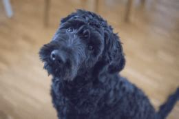 what does unconditional mean when buying a house doggie desires dog owner tips and how to s