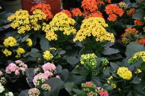 Indoor potted flowers x3cb x3eindoor plants x3c b x3e bellis brothers