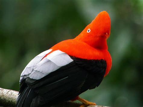 birds of colombia la mas bella unseen pictures 4 you