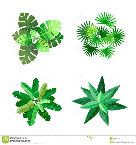 Colorful Tropical Plants - trees top view for landscape vector illustration stock vector image 53422279