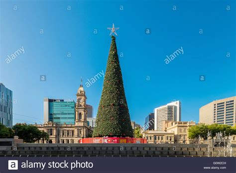 collection real christmas trees adelaide pictures