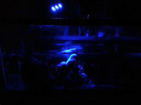 aquarium lunar led lights aquarium led verlichting wat moet je weten