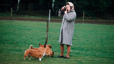 queen elizabeth corgi queen s favourite dog breed the corgi at risk of dying out