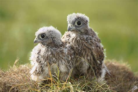 finding baby birds