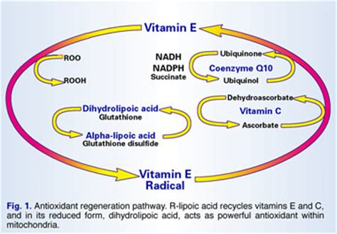 r ala supplement reviews r lipoic acid nutrition review