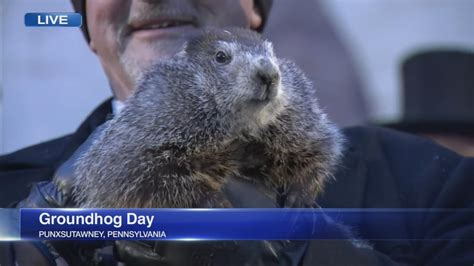 groundhog day prediction abc7chicago abc7 wls chicago and chicago news