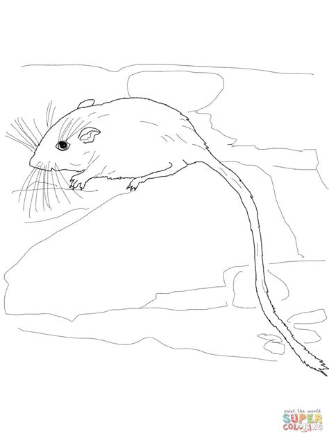Desert Mouse Coloring Page   301 moved permanently