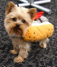yorkie costume dogs in costumes on pet costumes yorkie and costumes