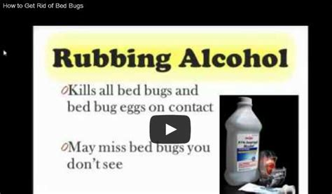 ideas  bed bugs  pinterest bed bug spray killing bed bugs  garment steamers