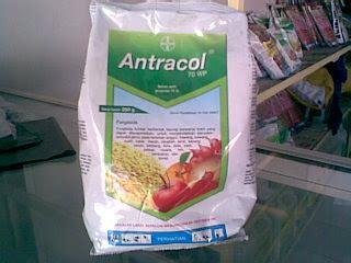 Pupuk 80 Wp informasi tentang pupuk fungisida antracol 70 wp