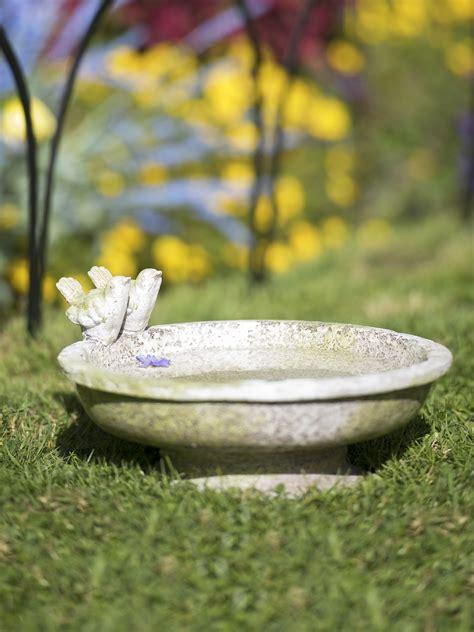 small bird bath  finches   ground gardenerscom