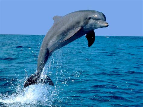 animales del mar gran delf n el mundo animal todos los tipos de delfines