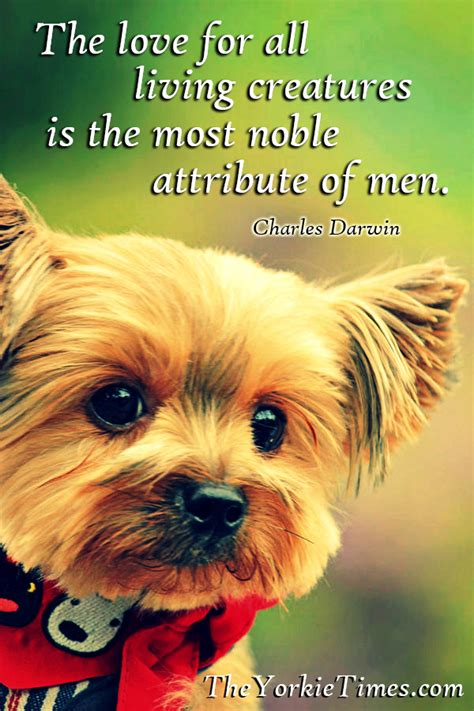 the lincoln chronicles puppy wisdom for happy living books yorkie quotes quotesgram