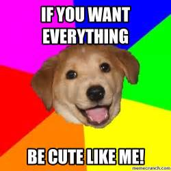 meme in nanopics puppy meme
