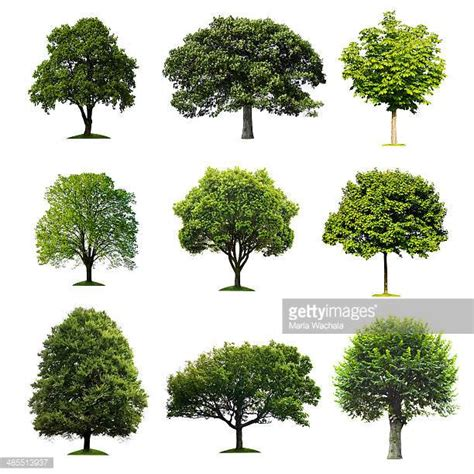 pictures of trees tree stock photos and pictures getty images