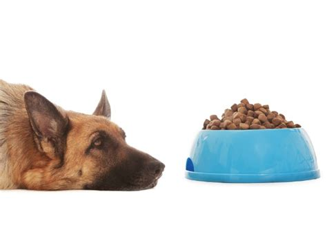can dogs asprin aspirin poisoning aspirin poisoning in petmd