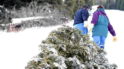 where to cut your own christmas tree in utah r pakistan