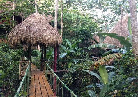 dominican tree house village wood is suitable for the dominican tree house village best house design