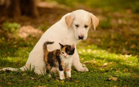 Puppy And Cat Wallpaper puppy and kitten wallpapers 58 images