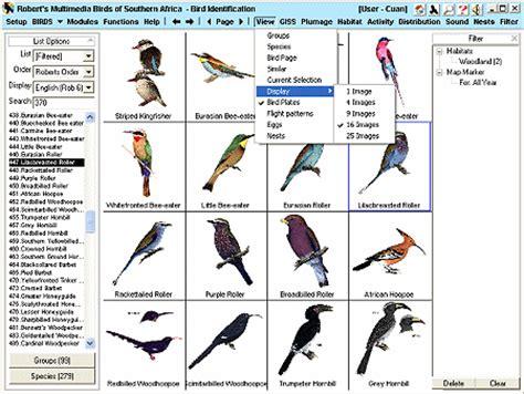identifying backyard birds birds of prey
