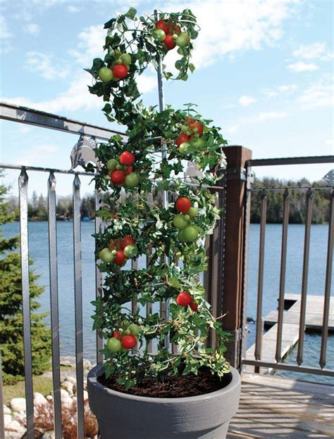 5 Vertical Vegetable Garden Ideas For Beginners Contemporist How To Grow A Vertical Vegetable Garden