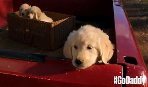 that has puppies commercial 6 reasons why godaddy s bowl puppy commercial is heartbreakingly awful