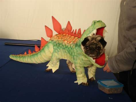 pug dinosaur costume 1000 ideas about godzilla costume on godzilla indiana jones and godzilla