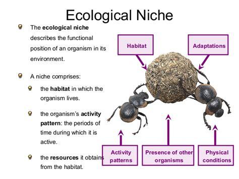 exle of niche ecological concept niche