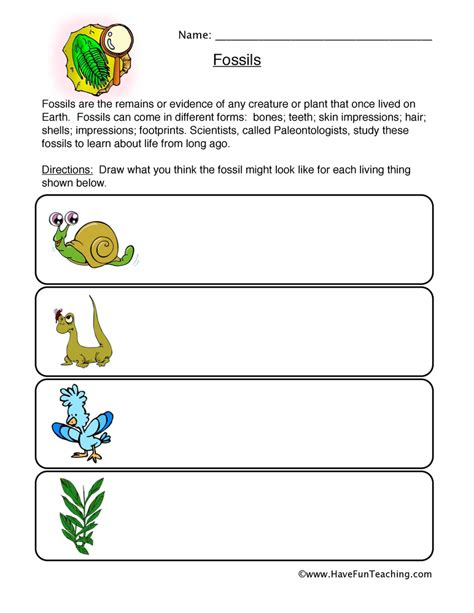 Fossil Worksheets by Fossils Worksheet