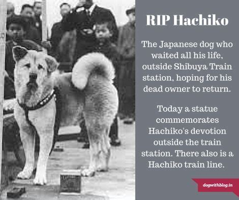 The Story Of Dogs hachiko review