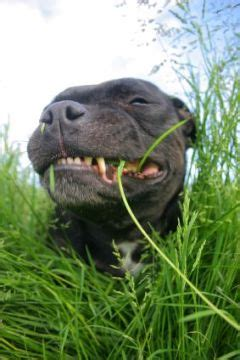grass and throwing up my is vomiting and grass puppy potty tips free
