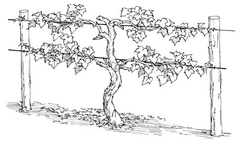Coloring Page Vine And Branches by 15 Closerdaybyday