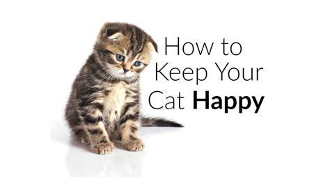 how to keep your cat from scratching your couch how to keep your cat happy litter robot blog