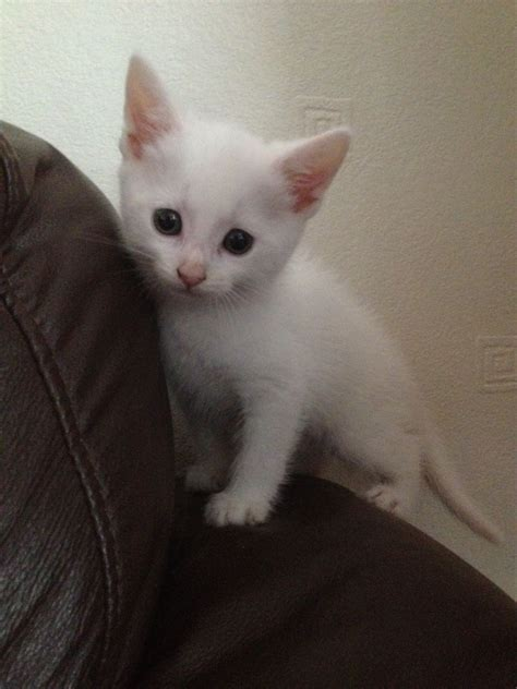 White Sale by Really Cats And Kittens White Www Pixshark